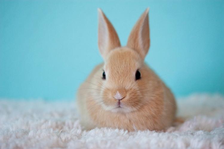Klatka dla królika dostępna w sklepie krakvet.pl