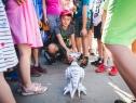 9DzienOdkrywców-09-06-2018 (fot. Kamil Pudełko)-5