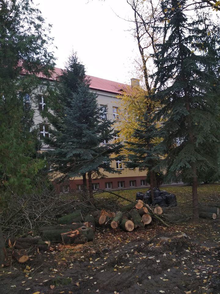 drzewo-5